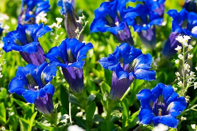 blueflowers3